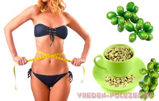 В хлорогеновой кислоте главный секрет снижения веса