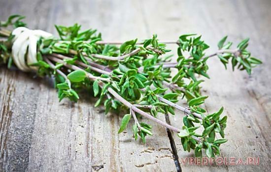 В стеблях травы содержится 40% тимола