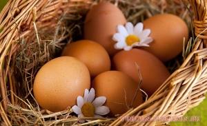 Яйца: польза и вред